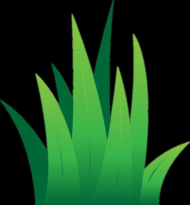 lawn-1417835_960_720